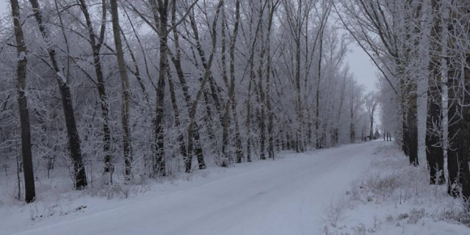 Фоторепортаж. Зимний морозный день 14 декабря глазами поспелихинцев