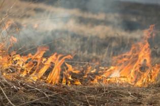 Чрезвычайная пожароопасность: на Алтае продлили штормовое предупреждение