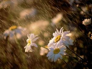 cvetje_a